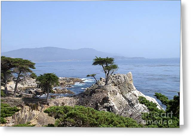 Lone Cypress Greeting Card by Bev Conover