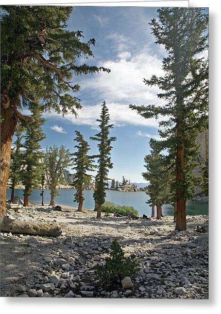 Lone Pine Lake Shoreline Greeting Card by Jim West