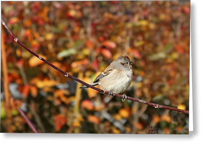 Lone Sparrow Greeting Card