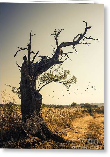 Lonely Tree Greeting Card by Carlos Caetano