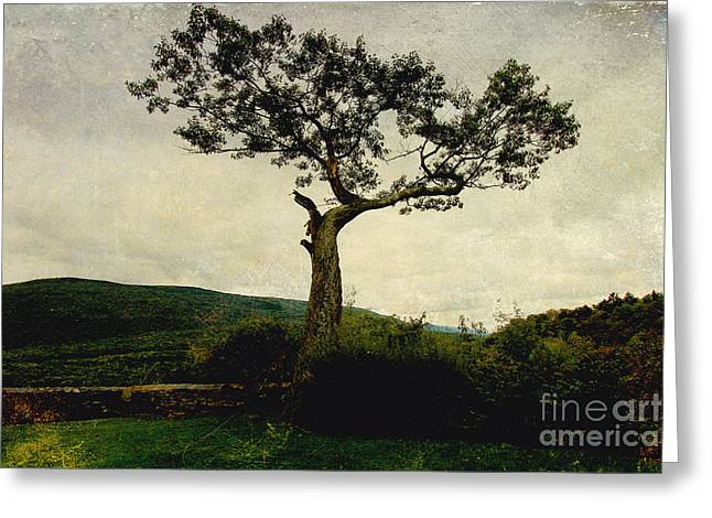 Greeting Card featuring the photograph Lonely Tree by Trina  Ansel