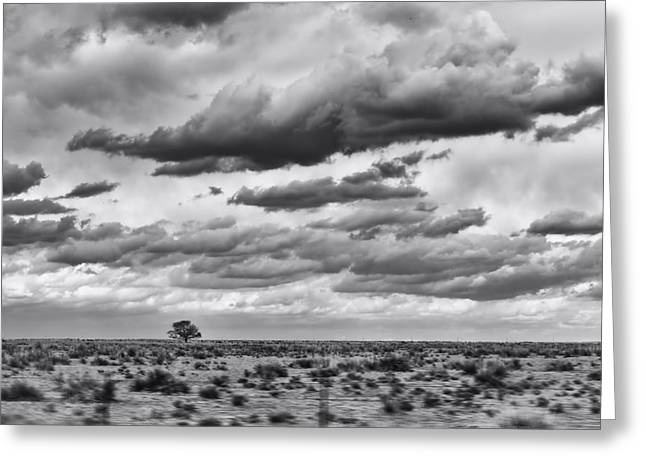 Lonesome Tree Bw Greeting Card by Alan Tonnesen