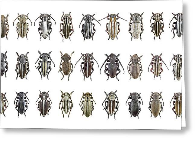 Longhorn Beetles Greeting Card