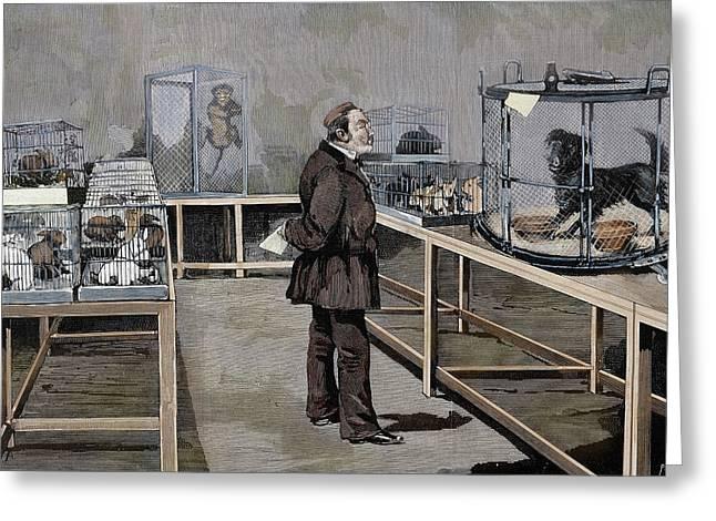 Louis Pasteur (1822-1895 Greeting Card by Prisma Archivo
