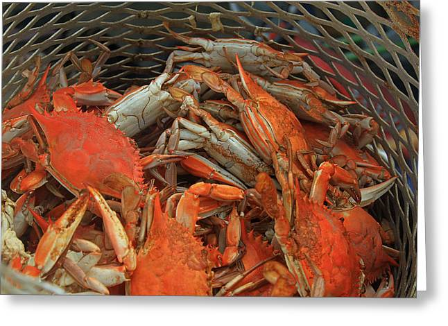 Louisiana Boiled Crabs Greeting Card