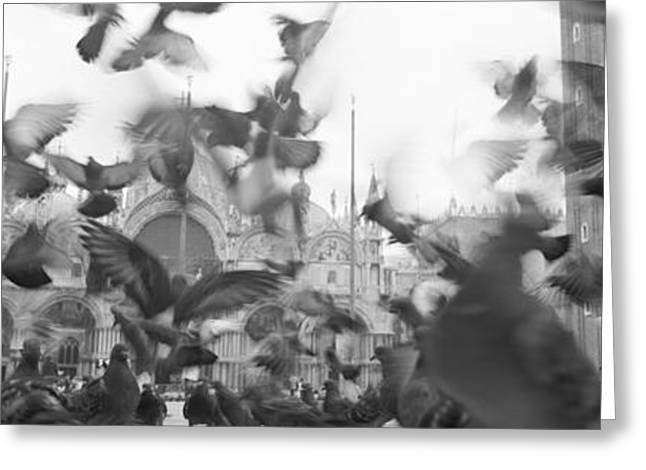 Low Angle View Of A Flock Of Pigeons Greeting Card by Panoramic Images