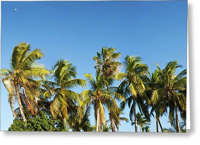 Low Angle View Of Palm Trees Greeting Card by Panoramic Images