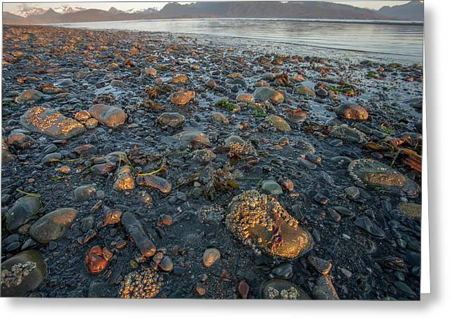 Low Tide At Sunrise Greeting Card by Tom Norring
