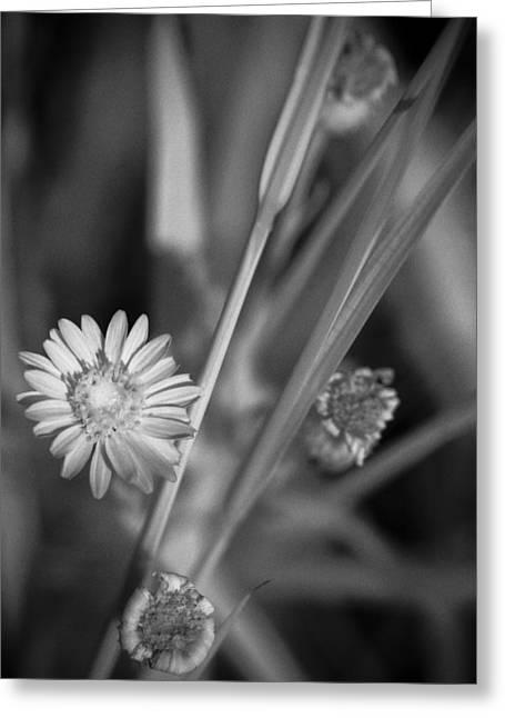 Loxahatchee Flower Greeting Card by Bradley R Youngberg