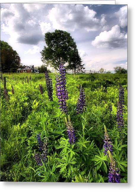 Lupines  Greeting Card by Andrea Galiffi