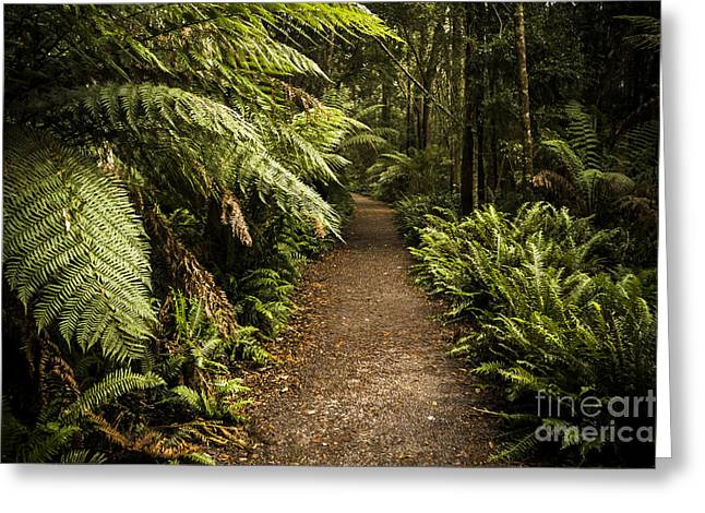 Lush Green Tasmanian Forest Trail In Strahan Greeting Card by Jorgo Photography - Wall Art Gallery