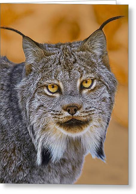Greeting Card featuring the photograph Lynx by Steve Zimic