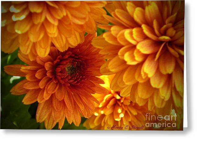 M Bright Orange Flowers Collection No. Bof2 Greeting Card