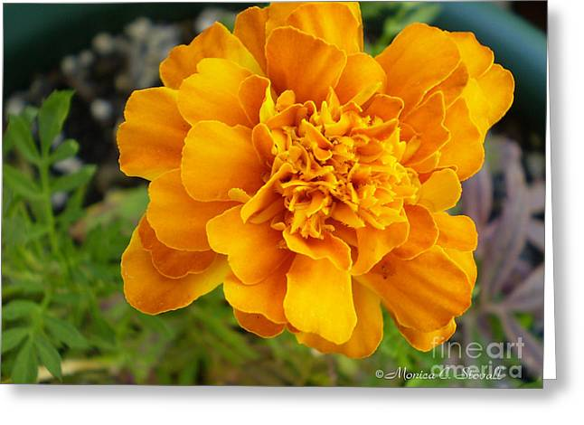 M Shades Of Orange Flowers Collection No. O7 Greeting Card