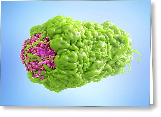 Macrophage Engulfing Cancer Cell Greeting Card by Maurizio De Angelis
