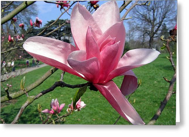 Magnolia 4 Greeting Card