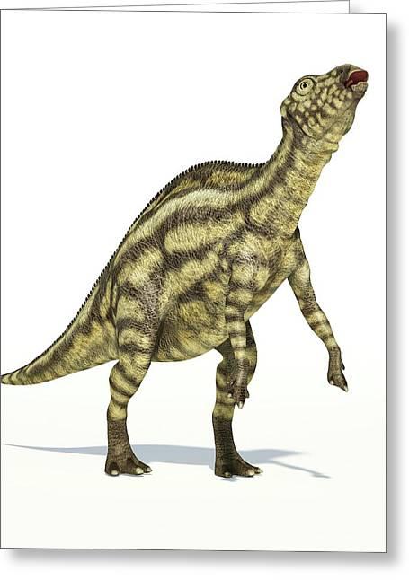 Maiasaura Dinosaur Greeting Card