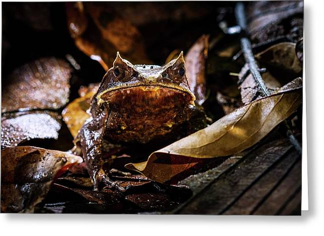 Malayan Horned Frog Camouflaged Greeting Card by Paul Williams