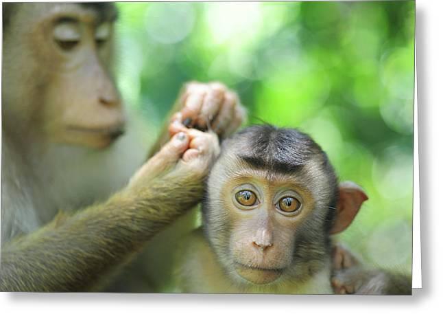 Malaysia, Borneo, Sepilok, Southern Greeting Card