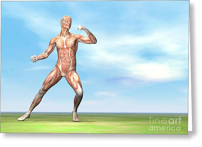Male Musculature In Fighting Stance Greeting Card