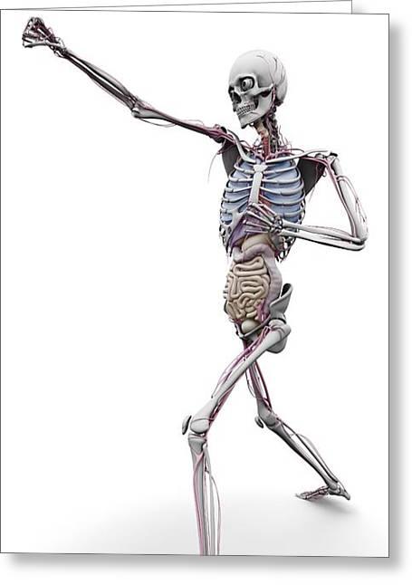 Male Skeleton And Organs, Artwork Greeting Card