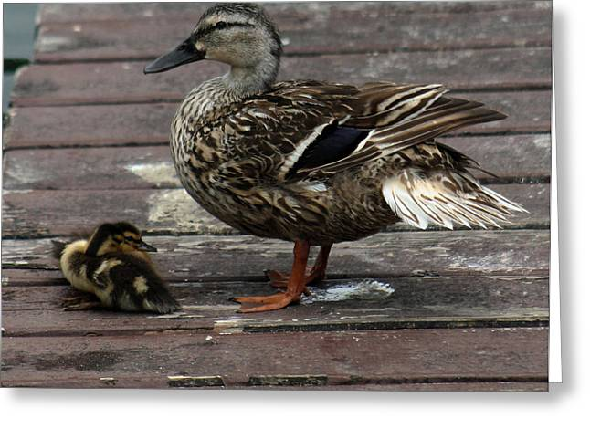Mama Duck And Ducklings Greeting Card by Pamela Walton