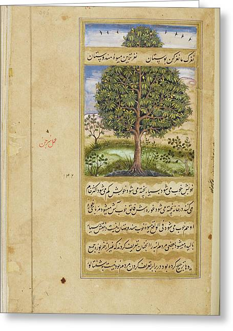 Mango Tree Greeting Card by British Library