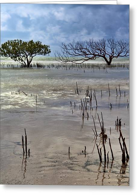Mangrove Tree In Blurred Sea Greeting Card by Dirk Ercken