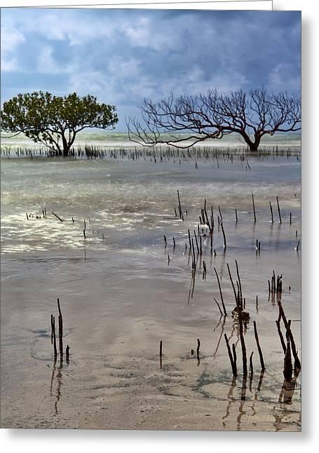 Mangrove Tree In Blurred Sea Greeting Card by Dirk Ercken