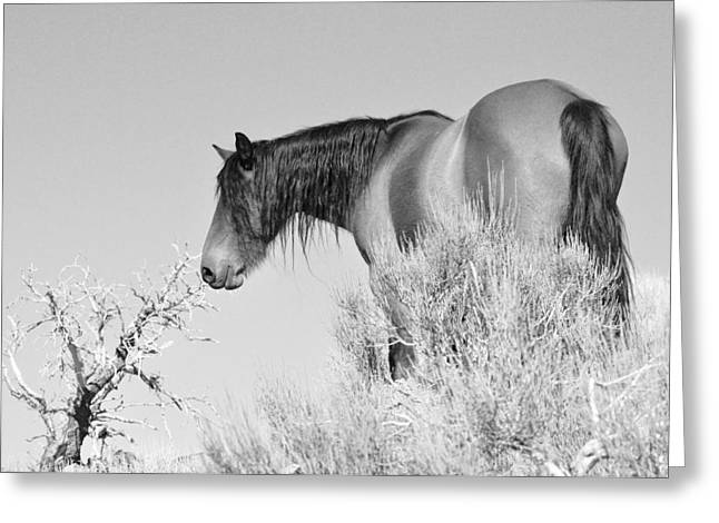 Greeting Card featuring the photograph Mare Up High by Lula Adams