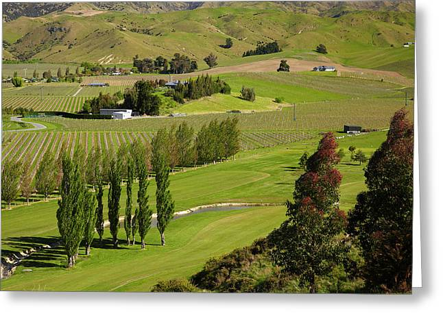 Marlborough Golf Club, Vineyard Greeting Card