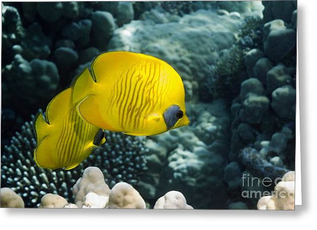 Masked Butterflyfish On A Reef Greeting Card