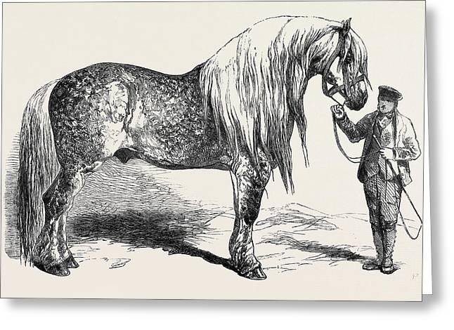 Meeting Of The Royal Agricultural Society At Salisbury No Greeting Card