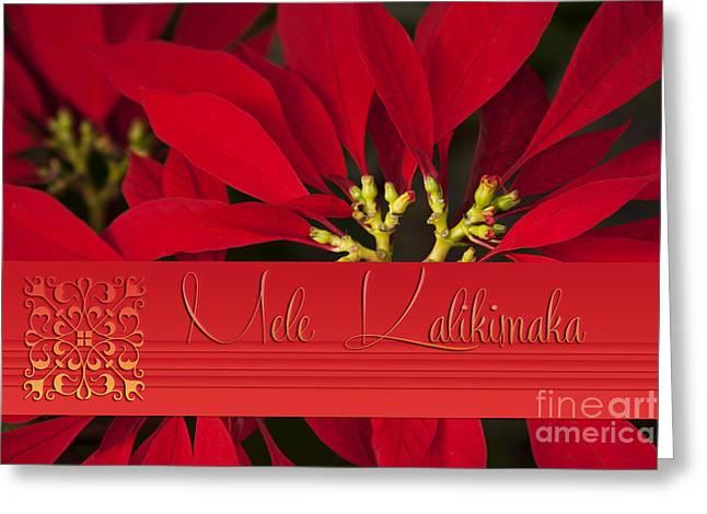 Mele Kalikimaka - Poinsettia  - Euphorbia Pulcherrima Greeting Card by Sharon Mau