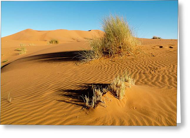 Merzouga, In The Deep South Of Morocco Greeting Card
