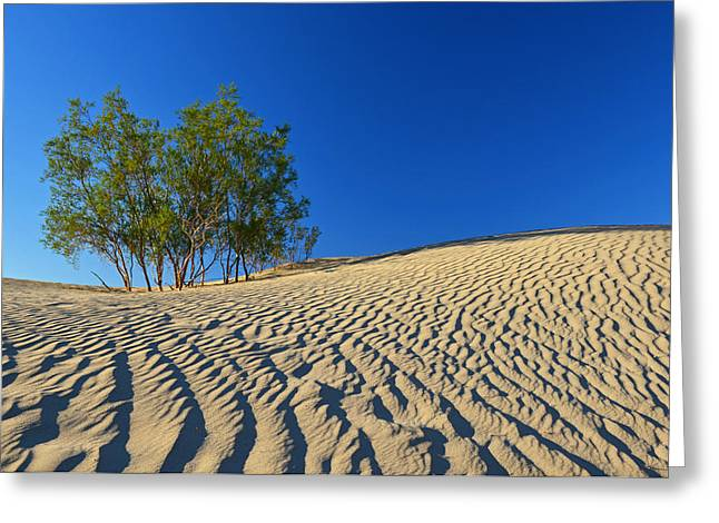 Greeting Card featuring the photograph Mesquite Flat Sand Dunes - Death Valley by Dana Sohr