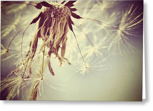 #mgmarts #dandelion #makeawish #wish Greeting Card