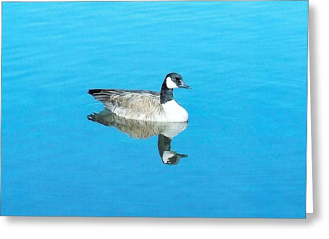 Greeting Card featuring the photograph Mirror Goose by Kerri Mortenson