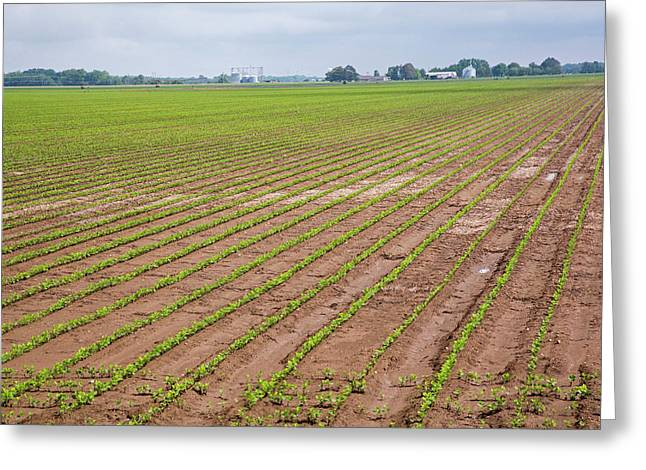 Mississippi Delta Farmland Greeting Card by Jim West