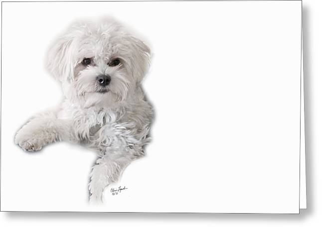 Mokie-3 Greeting Card by Chris Lynch