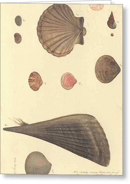 Molluscs Greeting Card by Natural History Museum, London