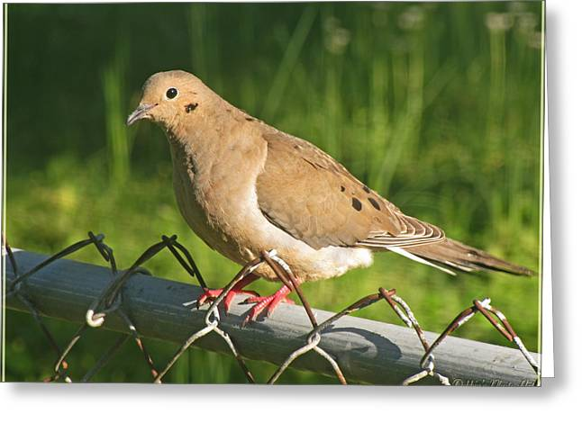 Morning Dove I Greeting Card