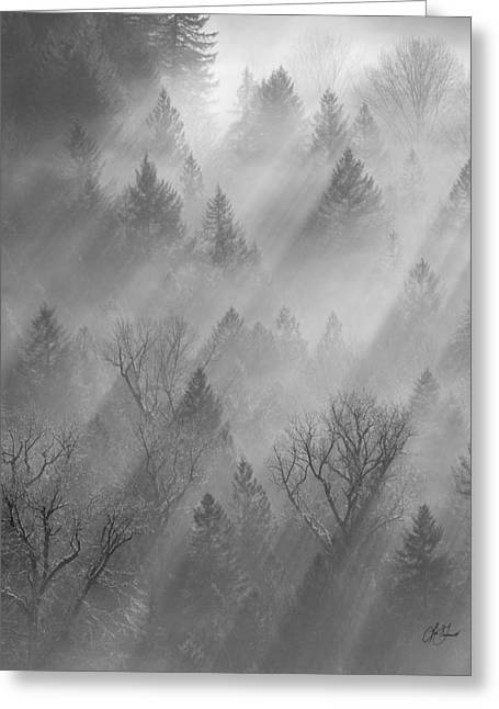 Morning Light -vertical Greeting Card by Lori Grimmett