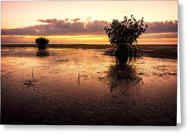 Morning Mangrove Trees Greeting Card