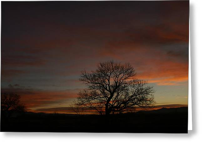 Morning Sky In Bosque Greeting Card