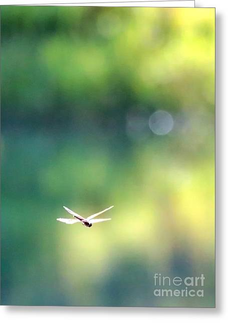 Morning Sunshine On Dragonfly Greeting Card