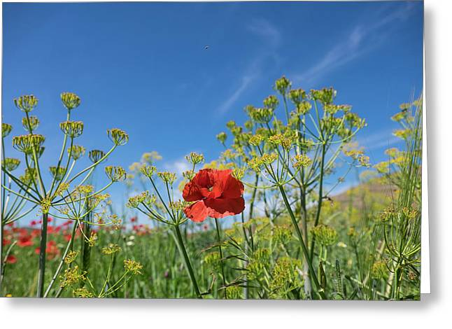 Morocco, Taounate, Spring Flowers Bloom Greeting Card by Emily Wilson
