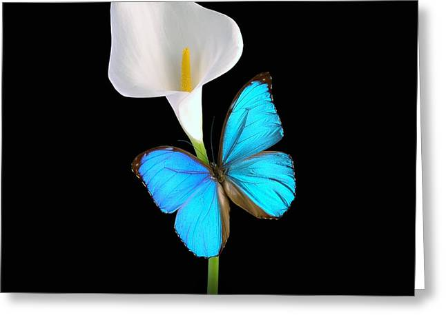 Greeting Card featuring the photograph Morpho On Calla by David Armstrong