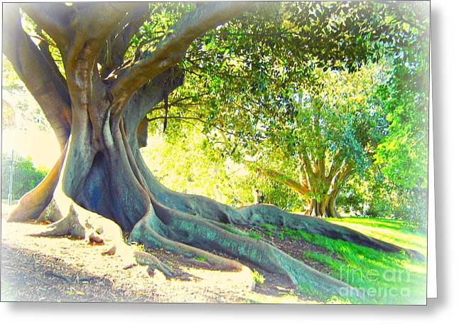 Morton Bay Fig Tree Greeting Card