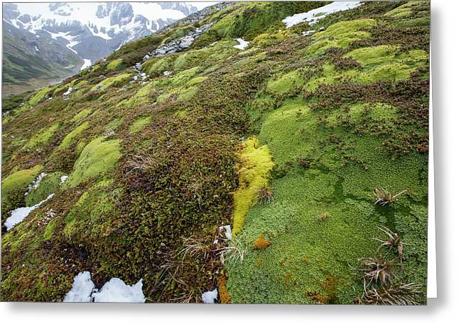 Moss And Flower Clumps Greeting Card